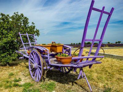 Haute Provence Valensole Lavender Provence Summer